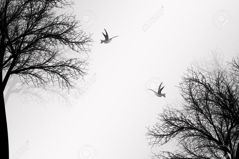 11028505-abstract-trees-and-birds-background-stock-vector-swirl-bird-silhouette