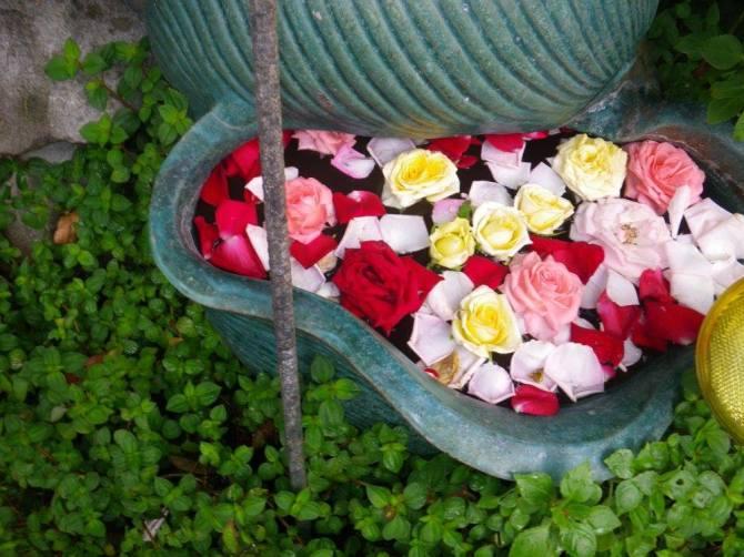Sonya's Garden – Urban floraldisplays