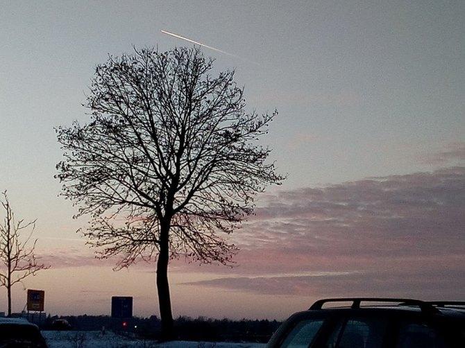 Sunday Trees –269