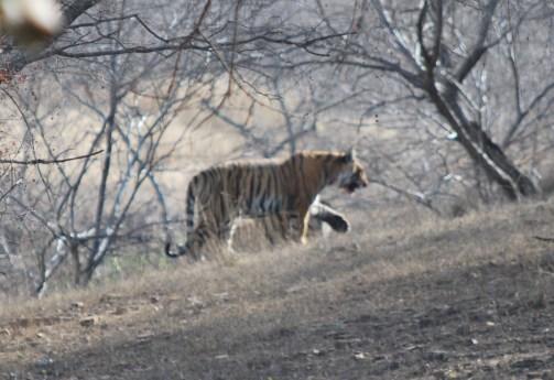 india-12451