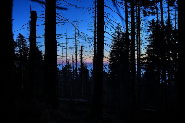 night-in-the-forest