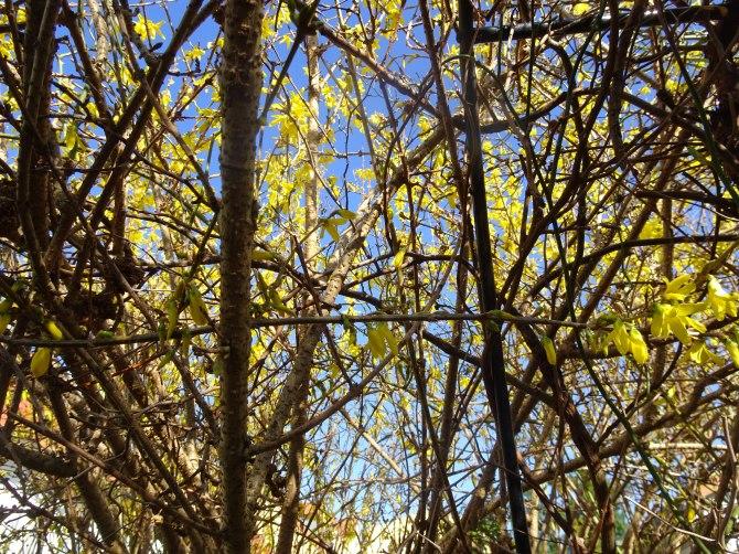 Cee's Fun Foto Challenge: Spring –Wood