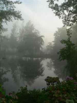 wmorning-fog
