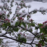 "TJ's Household Haiku Challenge - ""spring"" and ""cold"""