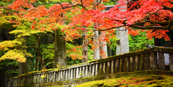 autumn-foliage-in-nikko-japan_shutterstock_147744167