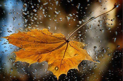 raindrops-on-leaves
