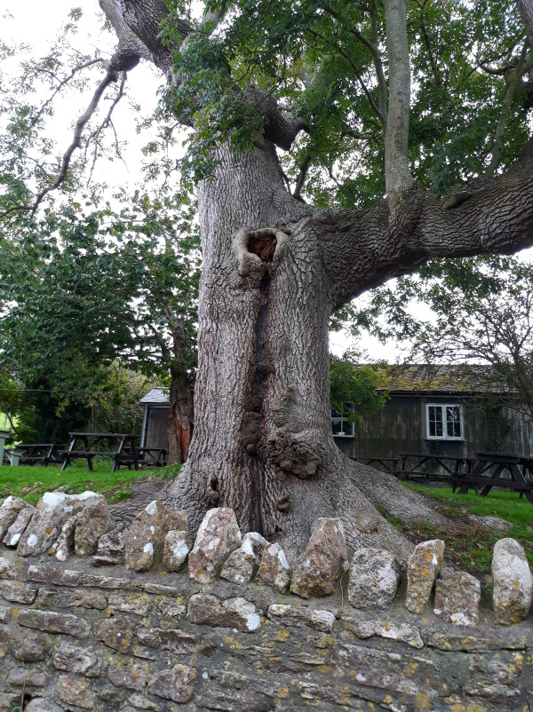 tree-sandra-crook