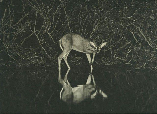 635cc655f8a02d9a0c10216ba2409222--flash-photography-wildlife-photography
