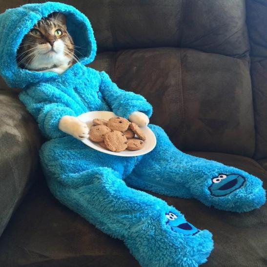 cats-pajamas