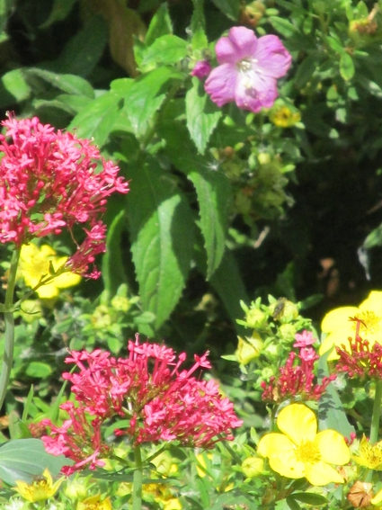 brightly-coloured-flowers