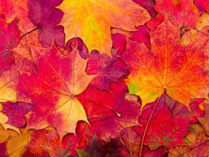 autumn-new-logo