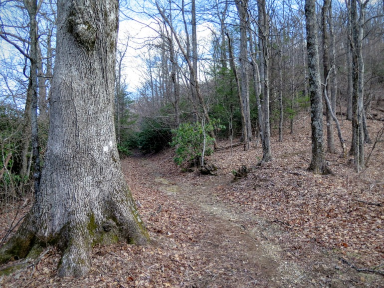 At Hazelwood Gap MST turns right at massive tree following Woods Mountain Trail