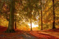 colours-of-autumn-1025240774-5c55ceadc9e77c000159a631
