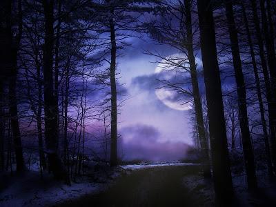 moonlit-forest