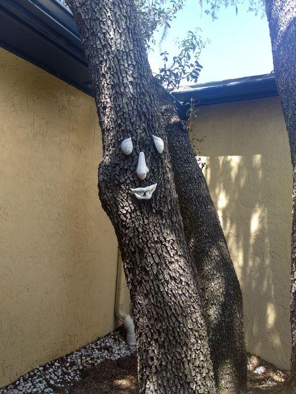 dcstultz-tree-face_64